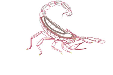Scorpion Dwg Drawing