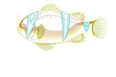 Fish Autocad Drawing