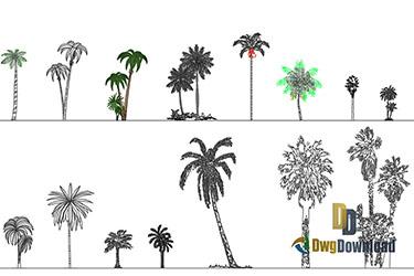 Palms Cads Blocks Dwg Download