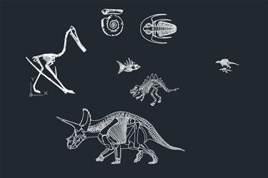 Fossils Cad Blocks Dwg